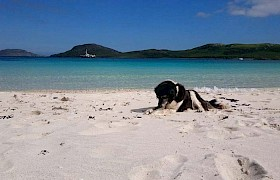 Vatersay, Madam loves to follow all the vistors
