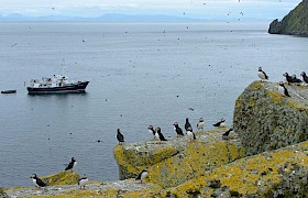 Puffins in the bay of the Shiant Islands