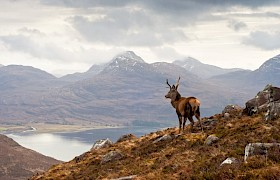 Red deer stags are spotted on our autumn cruises