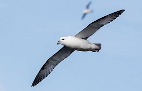 Fulmar Sam Udale Smith