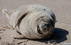 Seal on Mingulay, guest Richard Rees