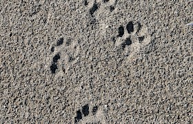 Otter footprints on Sandray