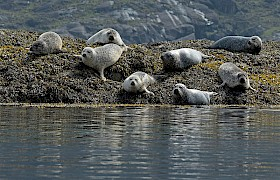 Seals at Loch Scavaig, Isle of Skye